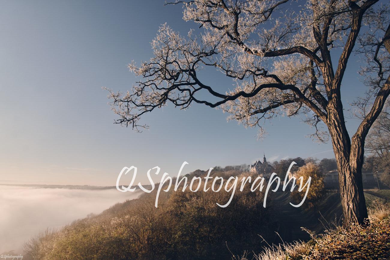 Photographie de Namur sous la brume avec un arbre et le château de Namur dans le fond